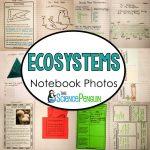 Ecosystems Science Notebook Photos