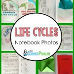 Life Cycles Notebook Photos