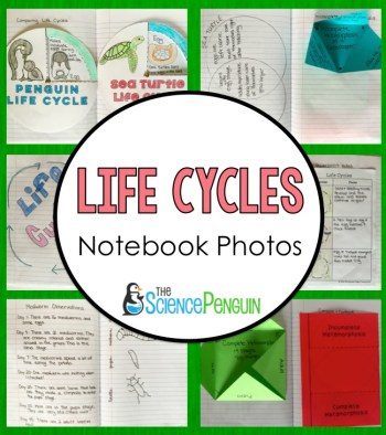 A Peek into my Notebook: Life Cycles Science Notebook Photos