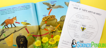 Picture Book Science Lesson: What if There Were No Bees? and Ecosystems