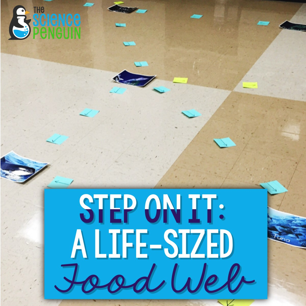 Step on it!  A life-sized food web