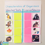 Science Vocabulary Ideas: Collaborative anchor charts for inherited traits and learned behaviors