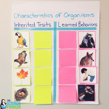 Collaborative Anchor Charts for Science Vocabulary: inherited traits and learned behaviors example