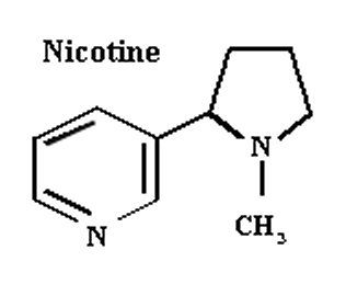 How is nicotine extracted from tobacco leaves and