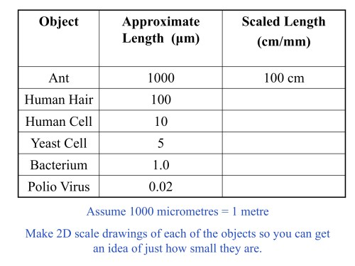 small resolution of microorganisms and scale