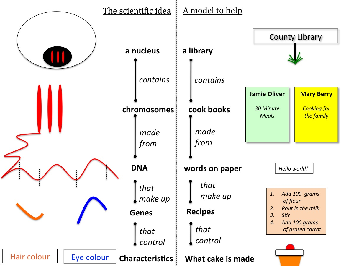 Genes And Inheritance Teaching Resources