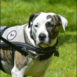 Emotional support or service animals: miseducation causes harm that policy alone won't fix