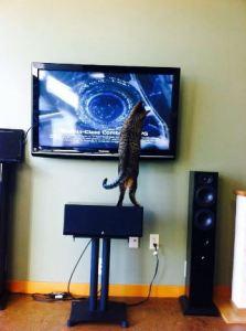 hank on the tv