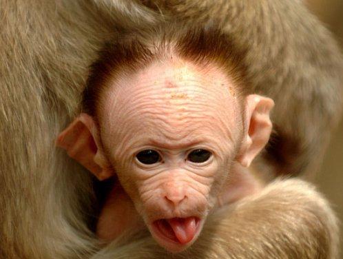 Funny-Monkey-31