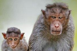 funny-monkeys-1