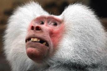 monkey-354