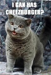 I can has cheezburger