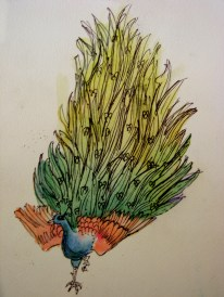 pui-peacock_watercolour