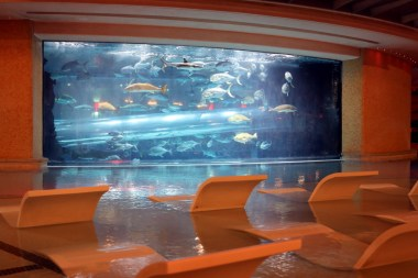 Golden Nugget pool with shark tank