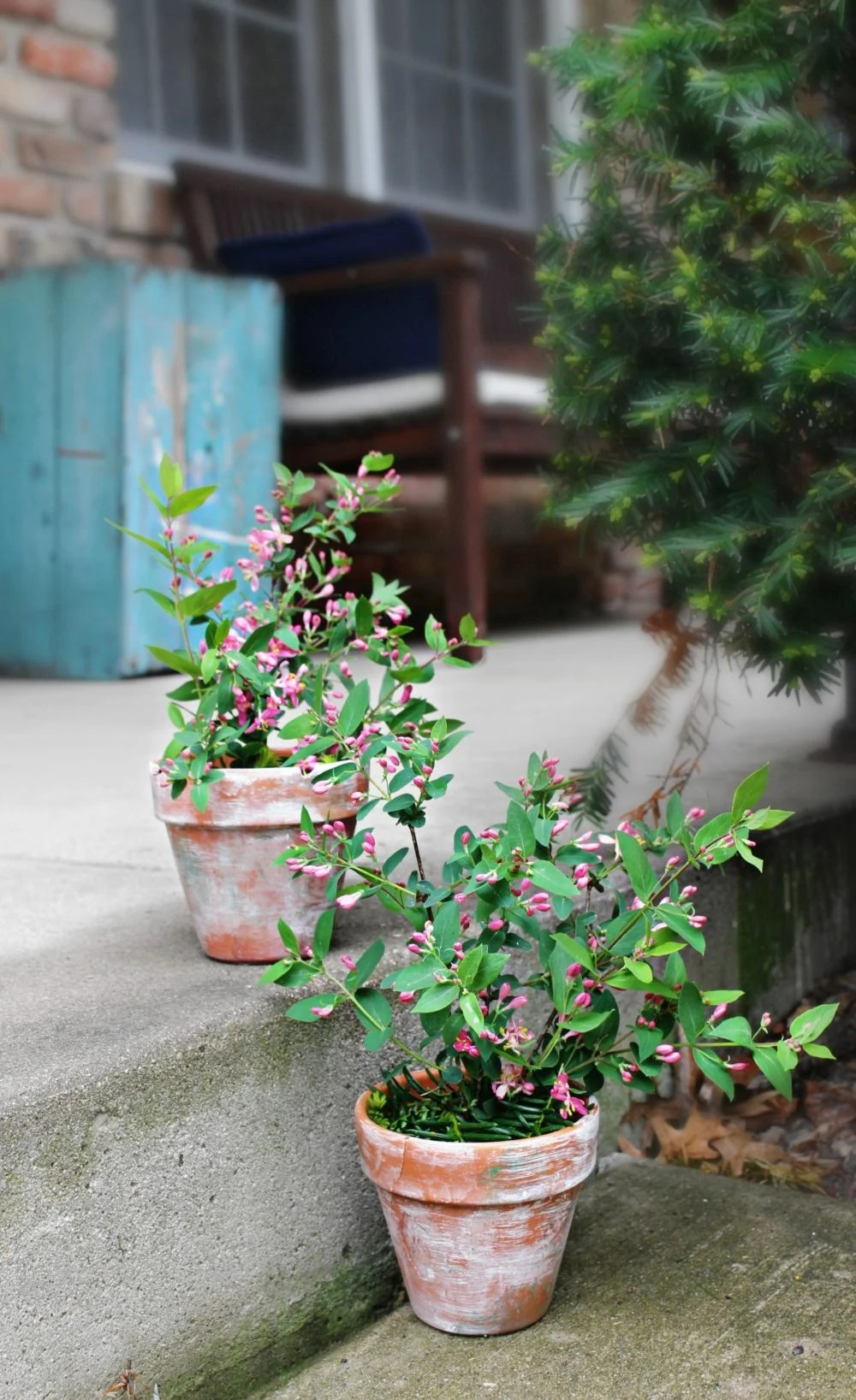 Aging terracotta pots