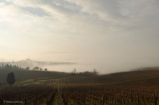 The Frescobaldi vineyards on the way to Porciano.