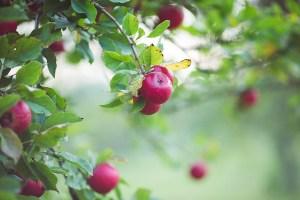 Smallholding - Orchard