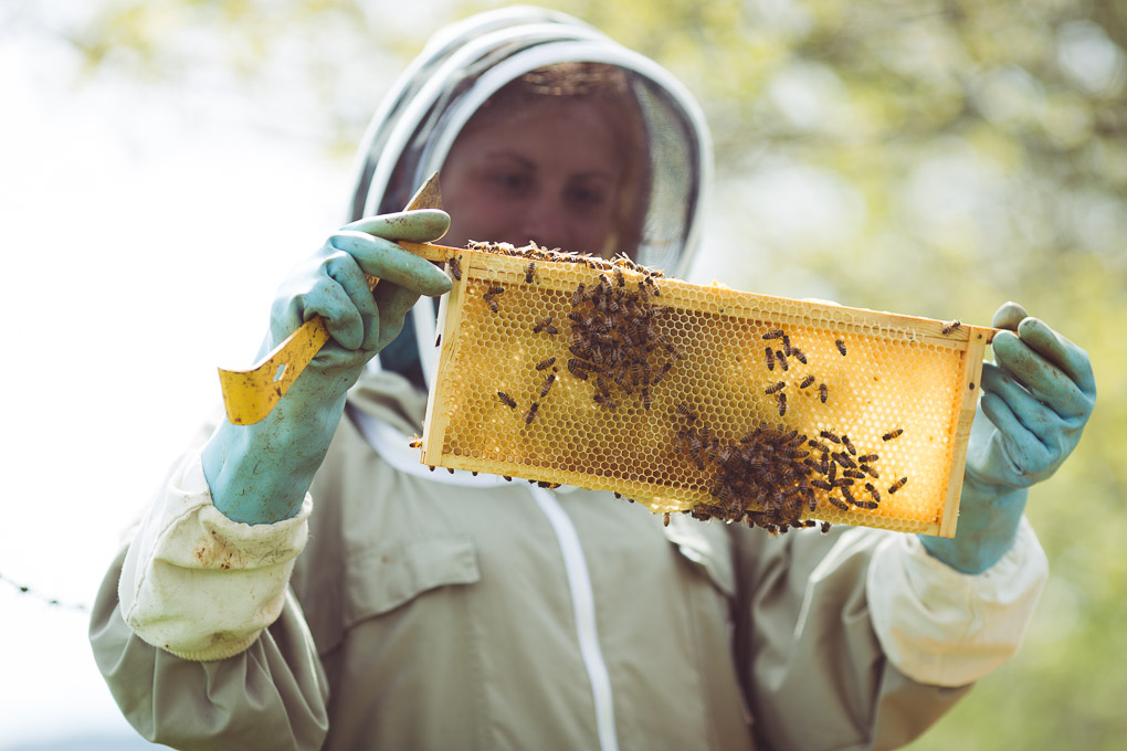 Rainy Days and Lost Swarms -- Inspecting the bee hive | https://theseasonaltable.co.uk/smallholding/rainy-days-lost-swarms/