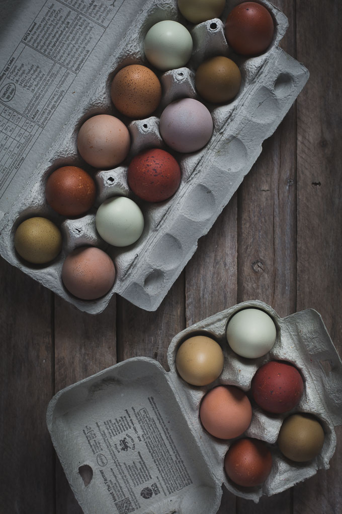 Chickens - Creating a Dual Purpose UK Easter Egger Flock – Part 1 -- Multi coloured chicken eggs | https://theseasonaltable.co.uk/smallholding/chickens-creating-a-dual-purpose-uk-easter-egger-flock-part-1