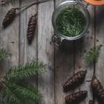 Pine Needle Vinegar -- vinegar infusion | https://theseasonaltable.co.uk/savoury/pine-needle-vinegar/