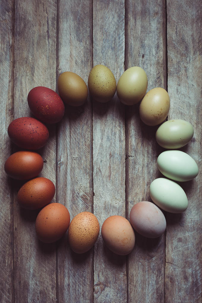 Chickens Creating a Dual Purpose UK Easter Egger Flock – Part 2 - multi coloured | https://theseasonaltable.co.uk/smallholding/chickens-creating-a-dual-purpose-uk-easter-egger-flock-part-2