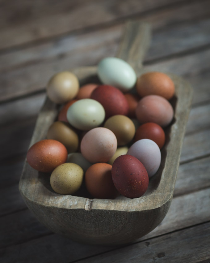 Chickens: Creating a Dual-Purpose UK Easter Egger Flock – Part 3 | Easter Egger UK