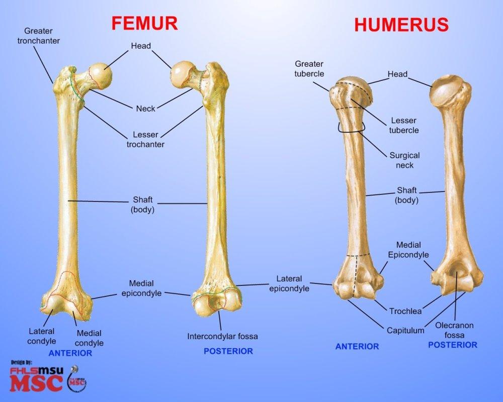 medium resolution of flesh on the bones