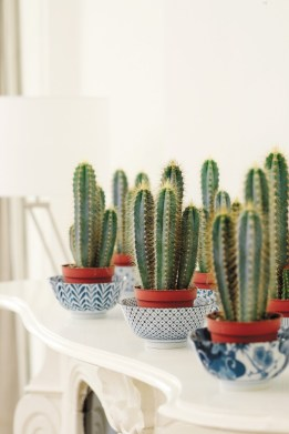 You can even display them in tea cups, bowls or even jars