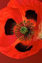 Wildflowers just £1.99 each