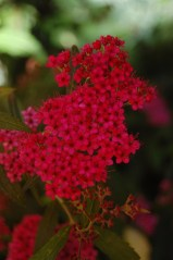 Gorgeous shades of red