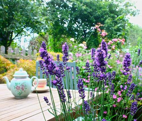 mindfulness gardening