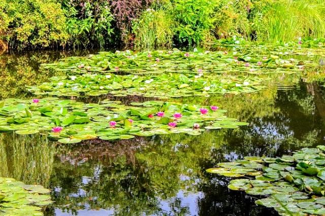 Claude Monet gardens Givenry
