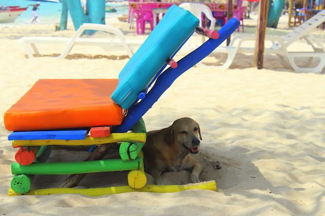 Dog in Playa Blanca, Cartagena, Colombia