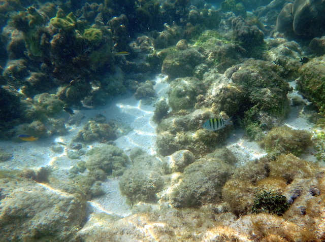 Snorkeling in Mustique island