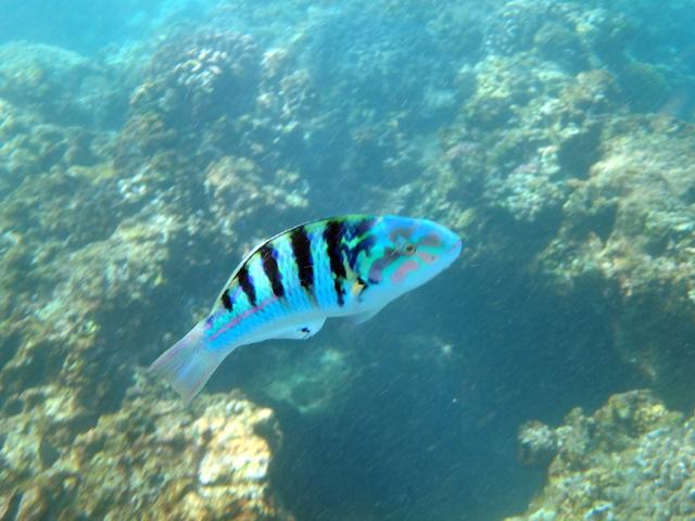 Snorkeling in Turtle Bay, Mauritius
