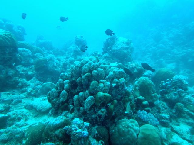 Scuba diving near Trou aux Biches in Mauritius