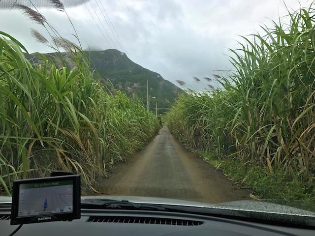 Driving through sugar can fields in Mauritius