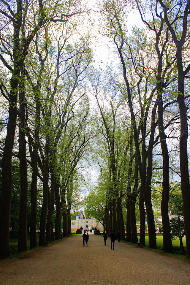Tree-lined avenue leading to the castle of Chenonceau