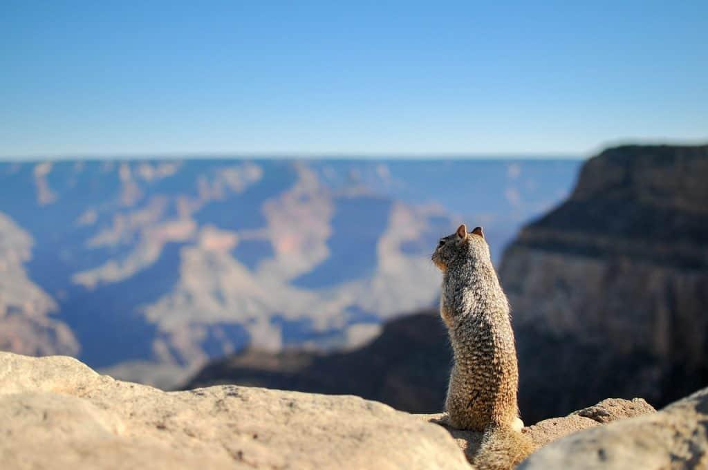 the squirrel spirit animal