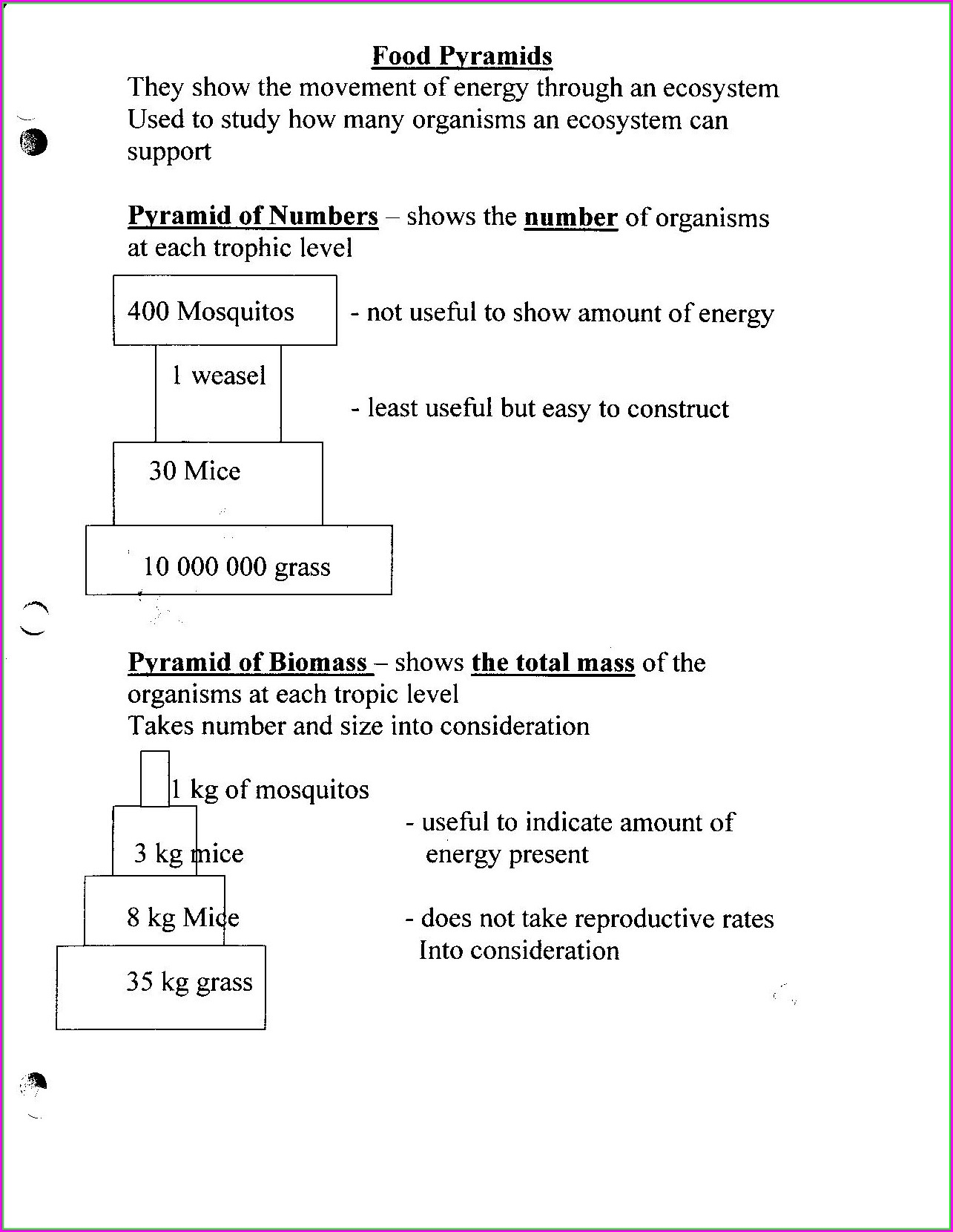 Key Bill Nye Food Web Worksheet Answers Worksheet Resume
