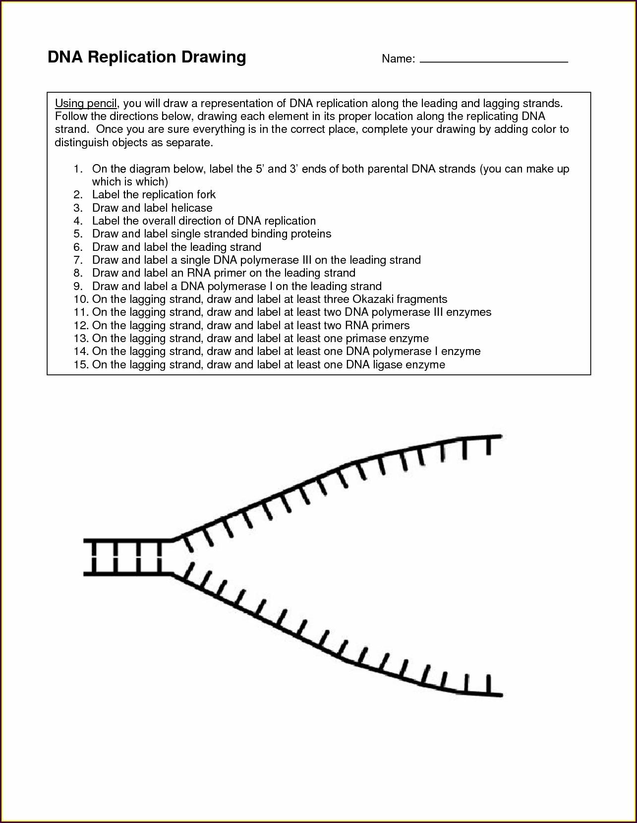 Middle School Calculating Net Force Worksheet Worksheet