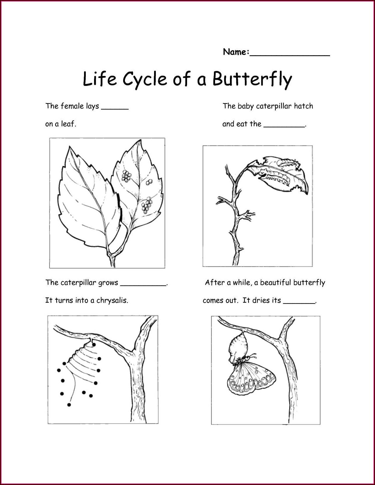 Free Science Worksheets For Kindergarten Worksheet