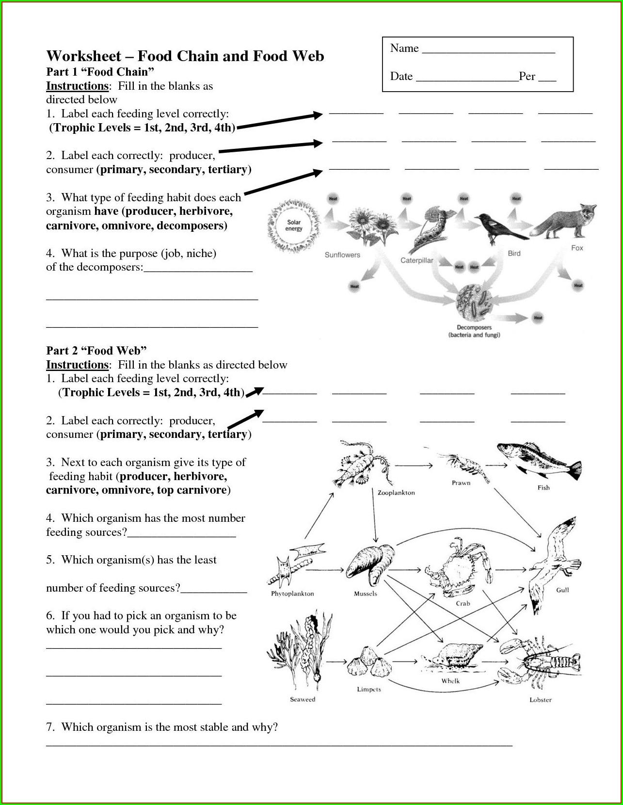 Marine Food Web Worksheet Answer Key Worksheet Resume