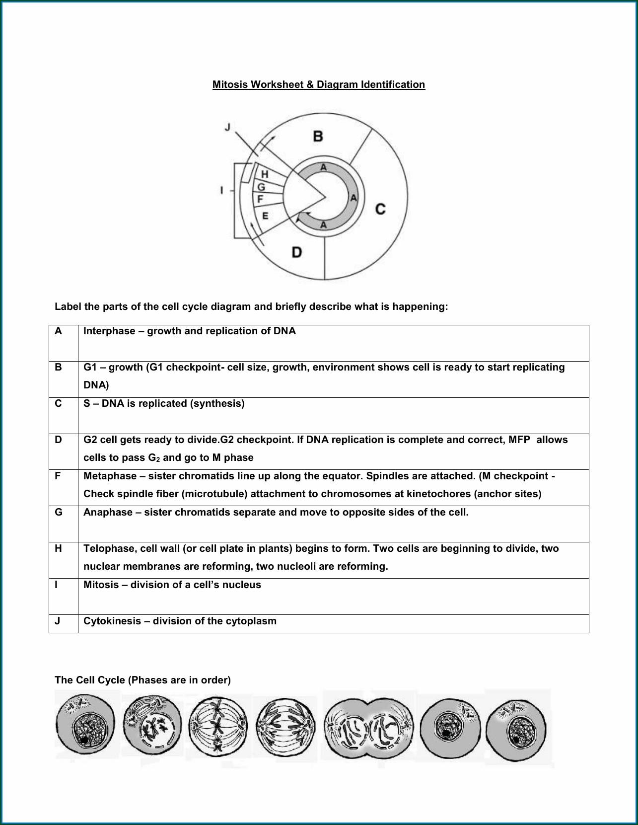High School Nitrogen Cycle Worksheet Answer Key Worksheet