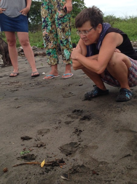 Volunteer Simone watches hatchlings take their first steps