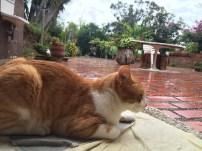 Garden siesta