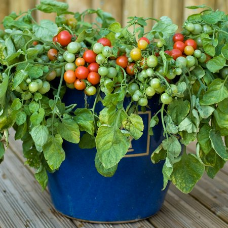 Image Result For What Soil To Use To Grow Vegetables In Pots