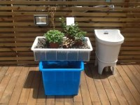 12 DIY Aquaponics System For Indoor And Backyard  The ...