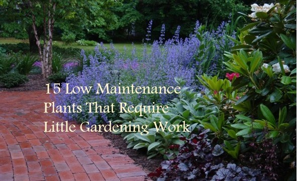 maintenance plants
