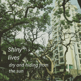 Shiny / lives / dry and hiding from / the sun